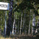 Padure-Nimoreni-4-ha-mesteceni