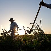 Crop Insurance in West Texas