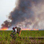 dominican_republic_cane_burn